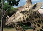 3DS「アニマルリゾート 動物園をつくろう!!」公式サイトにてゲーム内に登場する動物を紹介する「動物たち」やムービーを公開