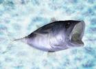 ニンテンドー3DS「Fish Eyes 3D」が2011年6月23日発売!ティザーサイトも公開中