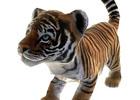 Xbox 360「Zoo Tycoon」無料体験版が3月12日に配信決定!アバターアイテムなどのダウンロードコンテンツ情報も公開