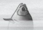 水墨画風デザインの和風ヘラブナ釣りゲーム「禅とヘラブナ釣りと私」がAndroid向けにリリース