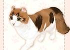 iOS/Android「マイにゃんカフェ」10連ガチャが実装!人懐こい性格のアメリカンカールも猫BOXに追加