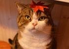 iOS/Android「てのひらニャンコ」開発者インタビューをお届け!モデルとなったリアル猫たちにも注目