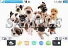 魚眼レンズで撮影した大きい鼻のかわいい犬たち「THE DOG」がニンテンドー3DSテーマに!