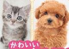 3DS「かわいいペットとくらそう!わんニャン&ミニミニアニマル」が本日発売!無料体験版も配信中