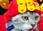 猫ちゃん達の写真を使用した、初の実写カードが登場!猫カフェ「MoCHA」×「のぶニャがの野望」コラボがスタート