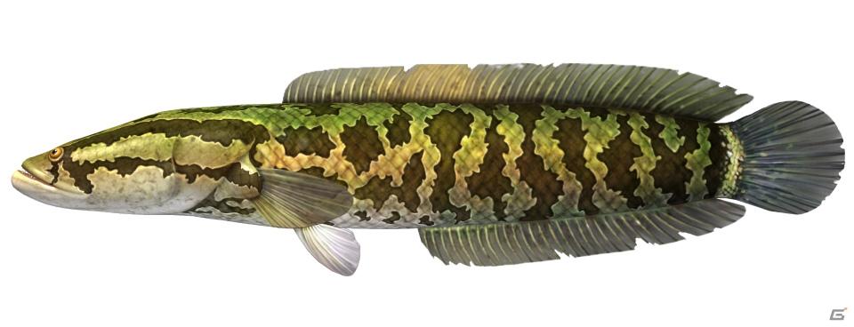 AC「釣りスピリッツ」に巨大なカエルが登場する新ステージ「蛙ノ池」が実装!
